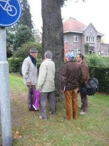 De boom in de bocht bij Heerde
