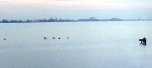 flamingo's in het veluwemeer